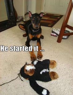 Be reassured...your Dobie will never, ever, eveeeeerrrrr embarass you. Check why at http://boredomkicker.com