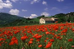 Countryside in Italy | What is the best view of Italy in May? « Italianindulgence's Blog