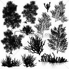 seaweed vector image - Google Search
