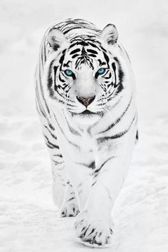 Beautiful animal with lovely blue eyes