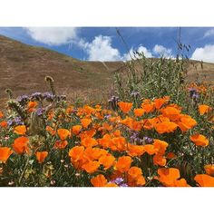 California National, State, Regional & Local Parks - CaliParks California Poppy, Valley California, Antelope Valley Poppy Reserve, Persian Cats, Local Parks, Park Photos, Travel Images, Park City, Lancaster