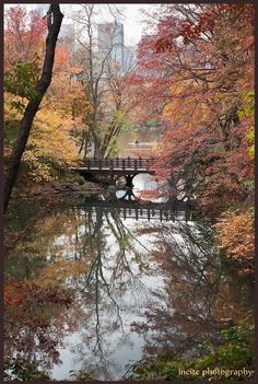 Central Park  The Ramble  Fine Art Print by incitephoto on Etsy, $25.00