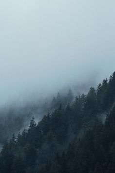 Scenic View of Foggy Forest · Free Stock Photo Mountain Wallpaper, Forest Wallpaper, Misty Forest, Dark Forest, Dark Mountains, Mountain Pictures, Adventure Is Out There, Beautiful World, Aesthetic Wallpapers