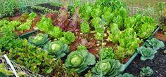 Potpuno prirodna sredstva za prskanje povrća, voća i raznog cvijeća