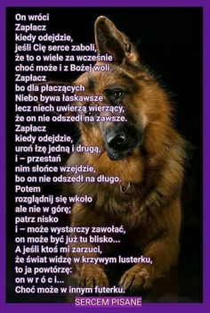 Dog Quotes, Animals And Pets, Nostalgia, Dogs, Sad, Cakes, Anime, Photos, Animal Pictures