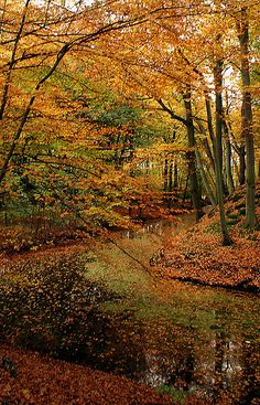 Autumn....so gorgeous.....