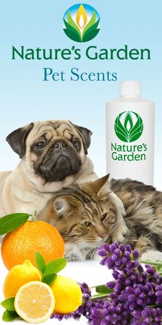 Natures Garden Fragrance Oils created a line of fragrances for pet bath and body products. These particular scents smell good enough to be worn by humans too. Can't be used to make candles though. #PetScents