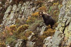 ¿Quieres ver el oso? Infórmate en www.bierzonatura.es