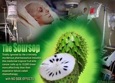Soursop kills cancer cells up to  10,000 times more