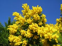♥ Memories ♥: Mimosen! Memories, Photo And Video, Fruit, Plants, Memoirs, Flora, Plant, Remember This