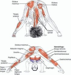 #yoga #anatomy
