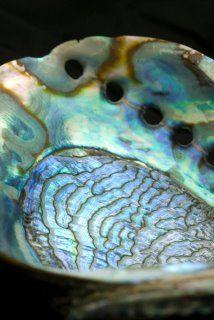 10 pièces en nacre Paua//Mérou environ 12 mm