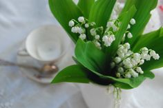 Lily of the Valley Lily Of The Valley, Plants, Home, Plant, Planting, Planets