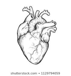 Human Heart Line Art and DotworkYou can find Heart tattoo and more on our website.Human Heart Line Art and Dotwork Tatoo Heart, Human Heart Tattoo, Human Heart Drawing, Human Art, Heart Anatomy Tattoo, Heart Drawings, Human Human, Drawings Of Hearts, Heart Anatomy Drawing