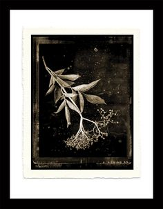 fine art black and white original photograph of flora printed on handmade paper