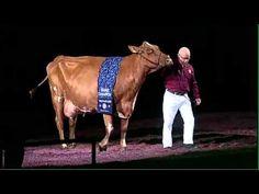 World Dairy Expo 2013 - Supreme Champion