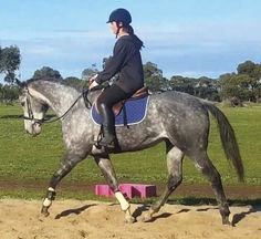 Gorgeous, Quiet & Very Trainable | Performance horses | Horse for sale in VIC | Australia | Horse Deals