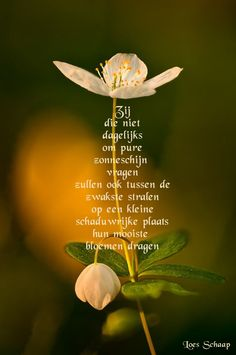 Levens gedicht Good Morning Wishes Quotes, Condolences Quotes, Me Quotes, Qoutes, Dutch Quotes, Word Out, Flora, Poems, Inspirational Quotes