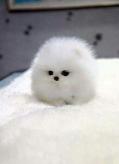 Bolinha branca #animais #cute #timbeta