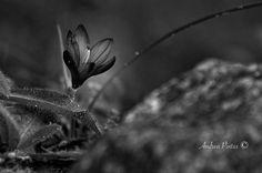 "Andrea Pintus on Instagram: ""Take care of the small things... . . #igers #igersitalia #sardinia #vscocam #igdaily #closeup #wildflowers #natgeo #nationalgeographic…"" Vsco Cam, Sardinia, Small Things, Take Care, Wildflowers, National Geographic, Close Up, Plant Leaves, Pets"