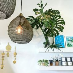 """12.7k Likes, 99 Comments - Urban Jungle Bloggers™ (@urbanjungleblog) on Instagram: """"Weekends are for plant shopping, like at the fabulous @nikau.store in Byron Bay, Australia! …"""""""