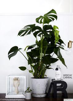 senkki,vintage,kasvit,sisustus,sisustusidea,makuuhuone,olohuone,työhuone