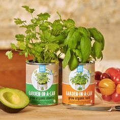 Garden in a Can are ready to grow cans make it fun and easy to harvest organic herbs right from your windowsill—just plant, water & grow!