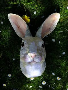 The Stealthy Rabbit