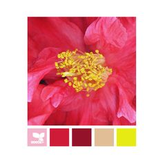 Design Seeds ❤ liked on Polyvore featuring design seeds, colors, color palettes, color pallete and colori