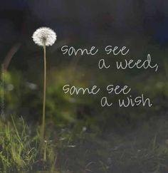 .. a wish