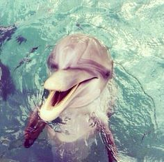Beautiful Dolphin