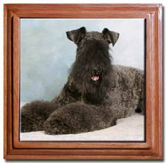 """Kerry Blue Terrier Tile Trivet by Canine Designs. $22.95. Overall Size 5.5"""" x 5.5"""".. Set in cherry colored wood frame.. 4.25"""" x 4.25"""" ceramic tile with high gloss finish.. Felt furniture protectors on bottom of frame.. Our beautiful ceramic tile trivets make for charming decor for the home or office.  Overall size is 5.5"""" x 5.5"""" and the ceramic tiles are 4.25"""" x 4.25"""" with a high gloss finish.  The trivet frame is solid wood with a cherry color finish and felt furniture protectors."""