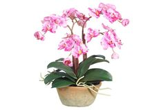 "15"" Petite Pink Orchid, Faux"