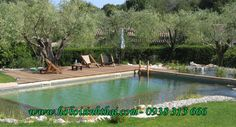 If you want a pool, a natural swimming pool is the way to go. A natural swimming pool is a body of water that uses no chemicals or electrical equipment. Swimming Pool Pond, Natural Swimming Ponds, Natural Pond, Living Pool, Pool Care, Pool Fence, Dream Pools, Pool Landscaping, Backyard Pools
