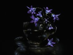 Still life light painting picture: bouquet of small bluebell flowers in transparent glass cup on saucer, against black background