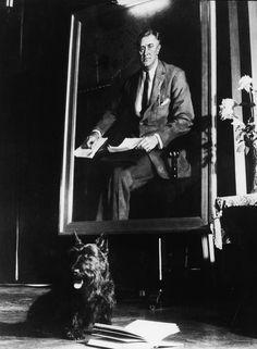 """""""Fala"""", o célebre Terrier Escocês do ex-presidente dos EUA Franklin Delano Roosevelt. Registro de 1940."""