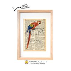 Tropical parrot bird dictionary print-Bird art print-Bird on book page-Natural history print-Upcycled Vintage Dictionary art-by NATURA PICTA