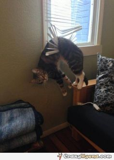 Humorous picture of a cat hanging on the blinds with a silly look on his face. I'm glad that yo are OK.