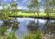 Domain has 74 Real Estate Properties for Sale in Bellingen, NSW, 2454 & surrounding suburbs. Investment Property, Property For Sale, Next At Home, Real Estate, Water, Outdoor, Gripe Water, Outdoors, Real Estates