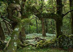 wanderthewood: Gwynedd, Pays de Galles par Defabled