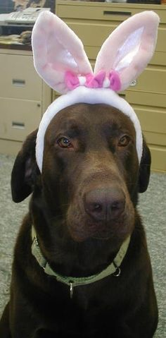 Chocolate Bunny:)