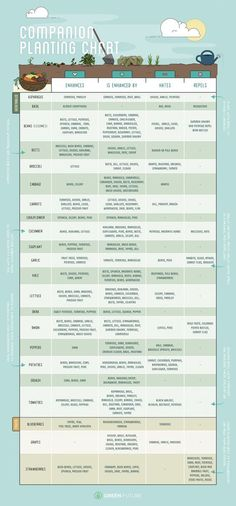 When it comes to gardening, think of your vegetable patch as a team effort. This companion planting printable shows what herbs, fruits, and vegetables you should plant together, and which plants should stay far away from each other!