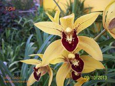 Orquideas Almeida - Um blog de Orquideas
