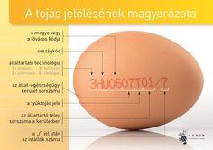 Amit a tojás jelöléséről tudni kell - Nébih Cake Tutorial, Kitchen Hacks, Kitchen Ideas, Blog Tips, Good To Know, Happy Life, Healthy Life, Fun Facts, Life Hacks