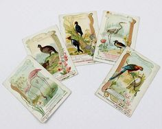 This is a lovely set of five Antique French chromo trade cards. The chocolate company gave these cards as premiums, collectibles and souvenirs from the early 1900s. DETAILS  - Authentic french vintage, sourced in France - 1910s - Guaranteed to be an original - Chololaterie d Aiguebelle(Drôme) - Theme  Birds - Listing is for FIVE (5) cards  - Gallinacés - Ground Birds - Echassiers White Egret & Golden Plover - Grimpeurs Climbers Yellow Crested Cockatoo & Red Parrot - Pie Magpies - Fla...