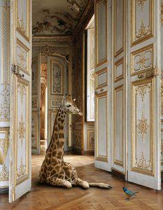 giraffe in ornate room.