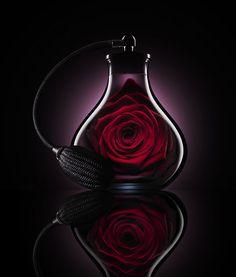 valentino parfum pub