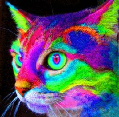 The cat is rainbow colored!!! I want one so bad!!