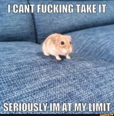 Bro I'm at my limit *hamster noises* - - - - - - - Lol Memes, Memes Humor, Stupid Funny Memes, Funny Relatable Memes, Haha Funny, Hilarious, Weed Funny, Animal Memes, Funny Animals