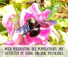 Wild Bee Populations Will Be Damaged By Organic Pesticides